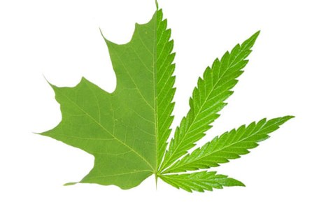 maple-leaf-or-pot-leaf-2-8612-1455731239-4_dblbig
